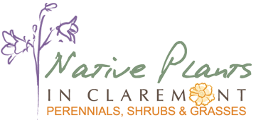 Native Plants in Claremont